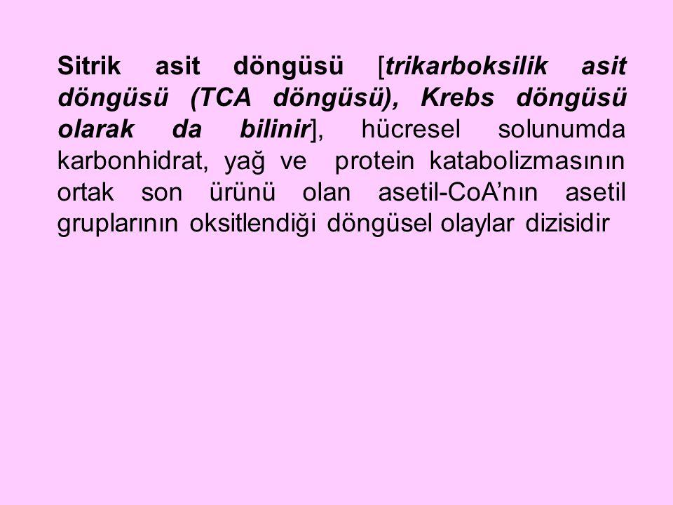 Sitrik asit döngüsü [trikarboksilik asit döngüsü (TCA döngüsü), Krebs döngüsü olarak da bilinir], hücresel solunumda karbonhidrat, yağ ve protein katabolizmasının ortak son ürünü olan asetil-CoA'nın asetil gruplarının oksitlendiği döngüsel olaylar dizisidir
